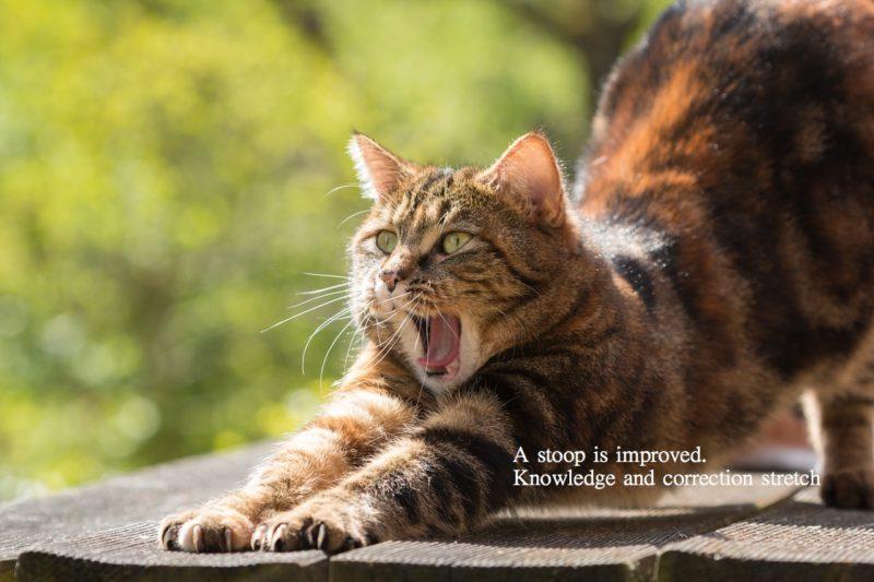 猫背を改善すために必要な知識と簡単矯正ストレッチ